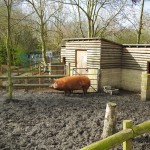 A taste of the countryside in the city: London's best city farms