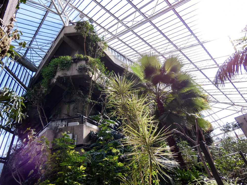 Visit the Barbican Conservatory